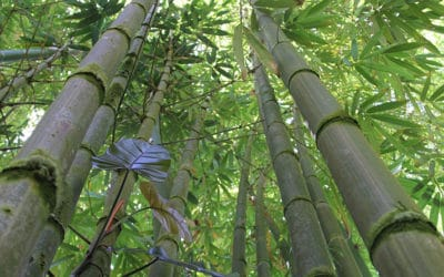 How Fast Does Bamboo Grow?