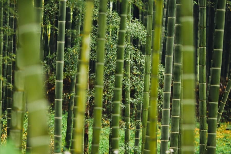 How Eco-Friendly Are Bamboo Products?