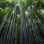 Where Bamboo Is Most Commonly Grown