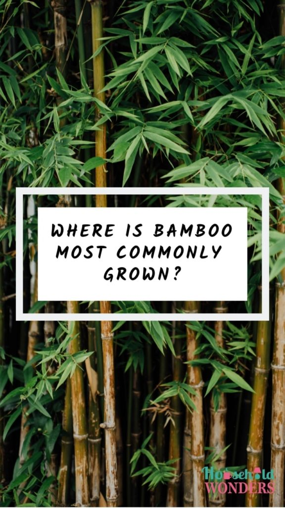where is bamboo most commonly grown