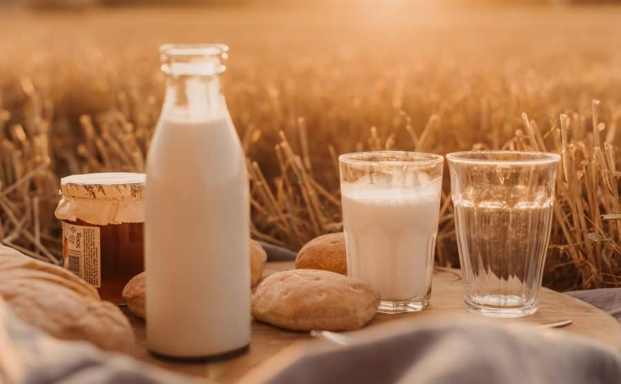 Top 6 Best Hemp Milk on the Market (Plus Powders!)