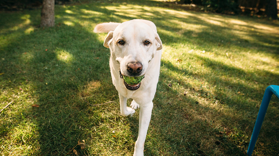 6 Ways to Be Eco-Friendly With Your Dog